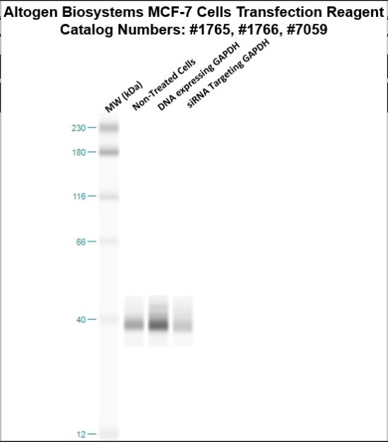 mcf7-cells-transfection-protocol